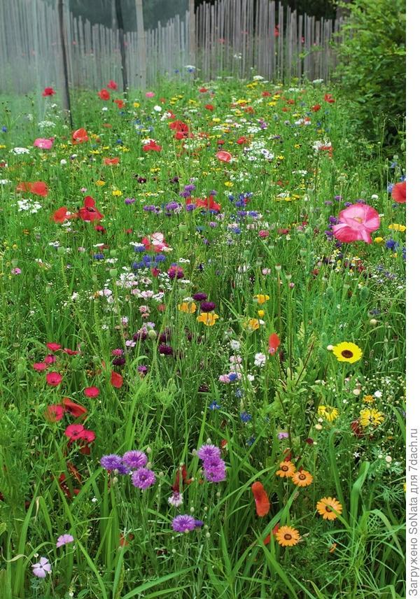 Посеять однолетние цветы - дело нехитрое. Небольшая гостка семян из цветочной смеси, и уже через несколько недель пестрый ковер расстелится повсюду