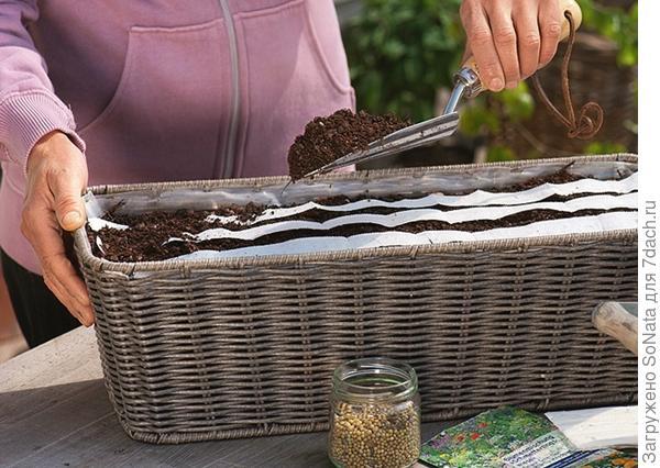 В ящиках и горшках семена на ленте позволяют добиться равномерного посева: заполните ящики цветочным грунтом, утрамбуйте его и сделайте бороздки глубиной 1 см.
