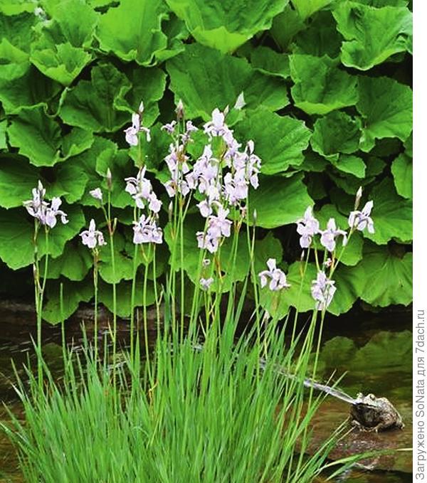 Впустите их в свой сад и наслаждайтесь его волшебным преображением!