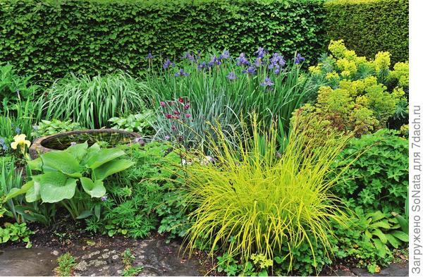 Не менее захватывающе выглядит и болотная клумба, здесь можно посадить бородатые, болотные и водяные ирисы, дополнив композицию растениями, привыкшими к подобным условиям существования.