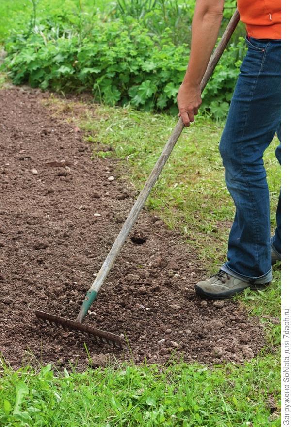 Через две недели участок еще раз обработайте граблями и удалите проросшие сорняки.