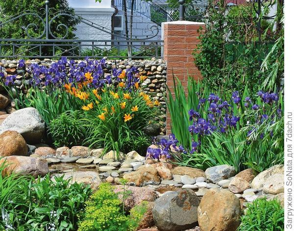 Это чудесное растение не требует трепетного ухода и при этом гарантирует невероятный эффект при реализации практически любой садовой идеи.