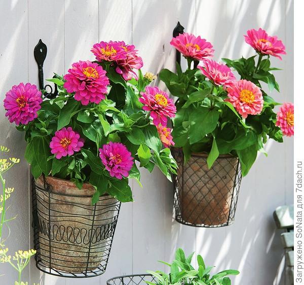Садоводы часто используют вертикальные поверхности, чтобы разместить на участке как можно больше любимчиков.