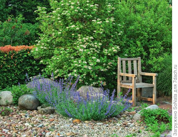 Синие соцветия котовника обогатили красками спокойный уголок сада, чем-то похожий на высохшее русло реки.