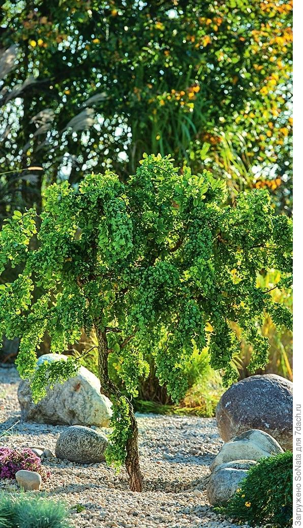 Неравномерно расставленные валуны придают этой зоне сада естественный вид.