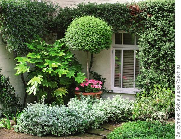 Вьющиеся растения быстро распространяются во все стороны, не принимая определенной формы. Если оставить их на милость природы, они поползут по земле, а с пергол и арок переберутся на соседние деревья.