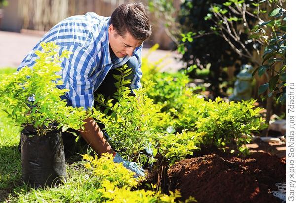 Растения с ЗКС пересаживать удобнее, да и шансов выжить  на новом месте у них больше.
