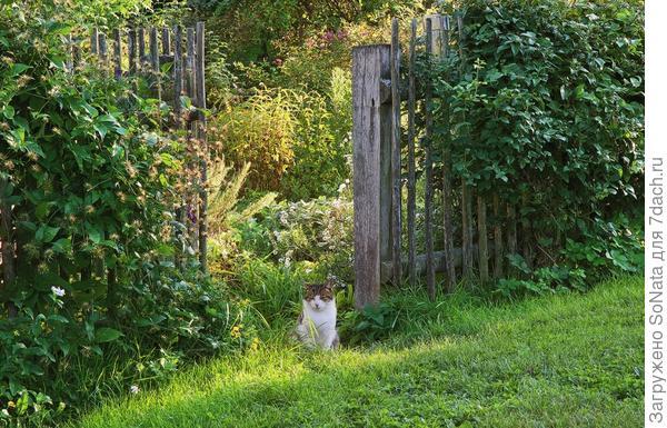 Котик Штройни (Бродяга) поджидает гостей у входа в сад.