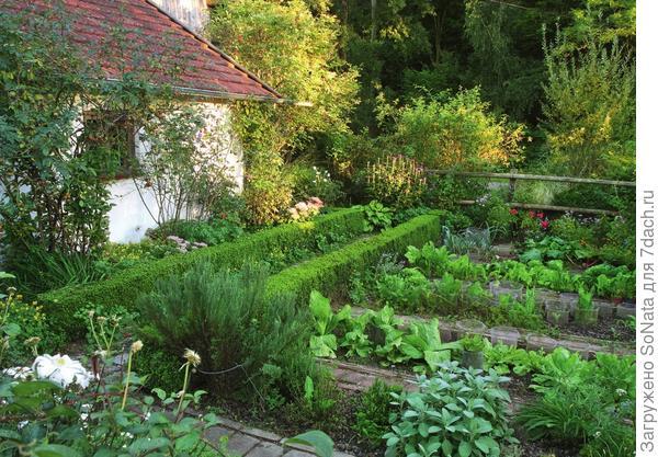 В огороде аккуратными рядами растут салат, корнеплоды и пряные травы.