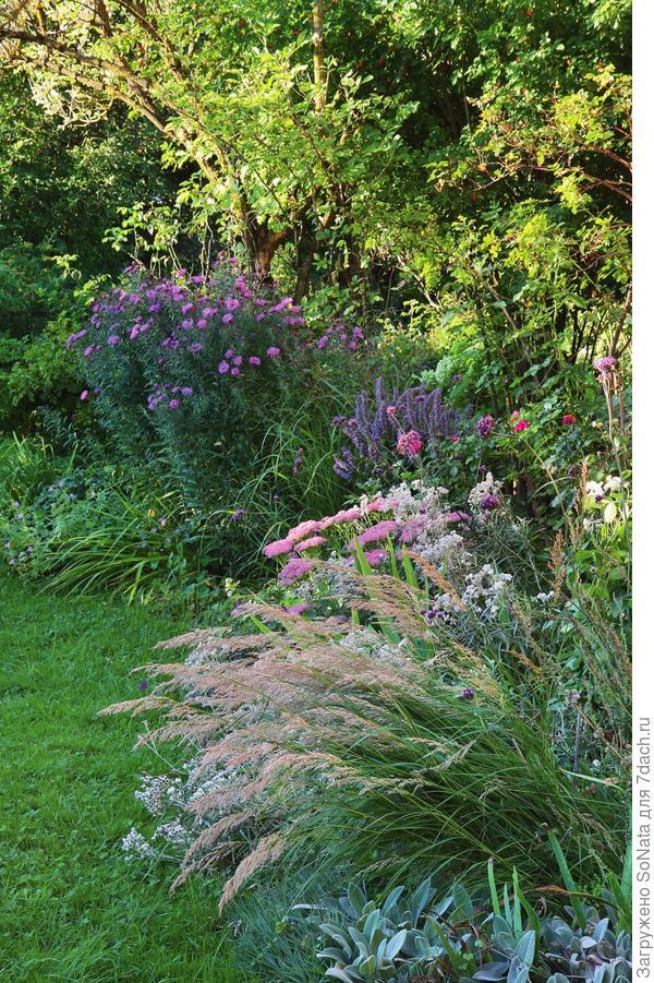 В цветниках травянистые многолетники (такие, как чистец византийский и герань) дополняют декоративные травы, очитки и астры.
