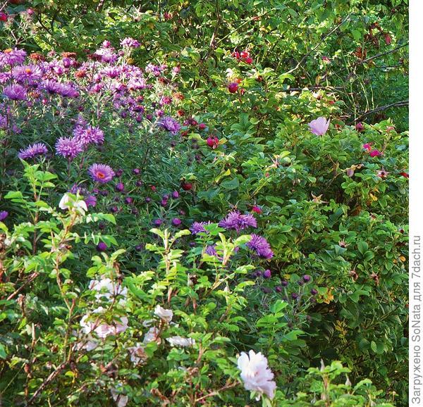 Сад стоит в цвету почти круглый год: начиная с весенников ранней весной, продолжая цветение хохлатками и летними цветами и вплоть до осени с ее астрами и очитками.