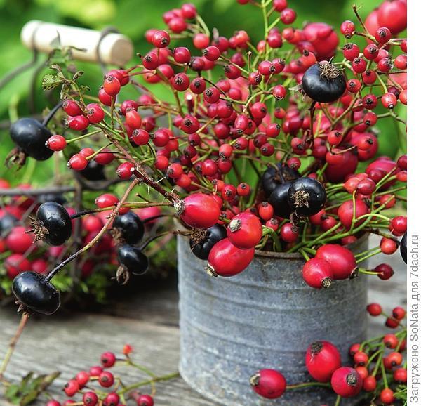 Рустикальный букет из веточек шиповника с черными плодами, шиповника мелкоцветкового  с мелкими красными плодами и шиповника собачьего с алыми - отличное украшение осеннего стола.
