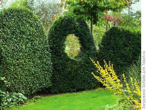 Волнистый забор - вполне надежная защита, а поболтать с добрыми соседями можно и через зеленое окошко!