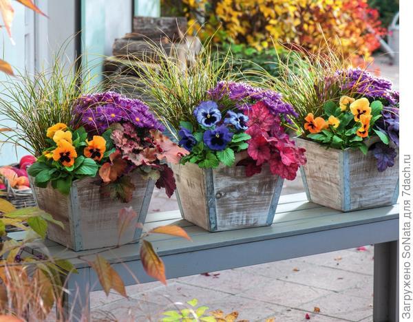 Триптих: в каждом горшке низкорослую осоку и астру с фиолетовыми цветками дополняют фиалка трехцветная и гейхера.
