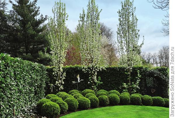 Графичные многослойные перегородки можно вырастить и из хвойных растений.