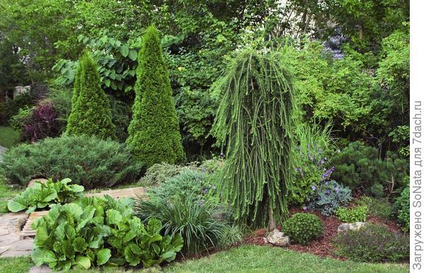 Эффектные и при этом простые по исполнению компании легко создать из трех-пяти растений, разных по высоте, но представляющих один и тот же вид и сорт.