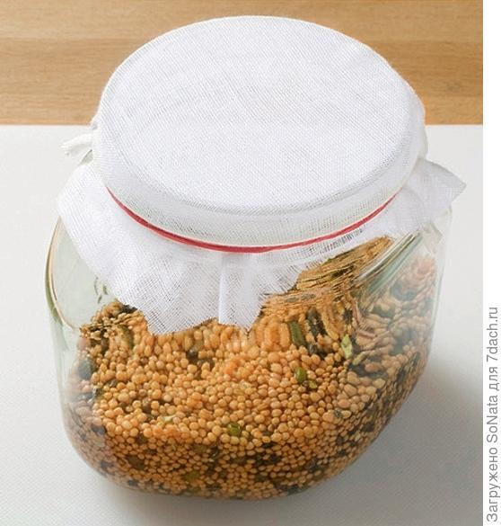 Закройте банку на время проращивания тонкой тканью. Ткань закрепите аптечной резинкой.