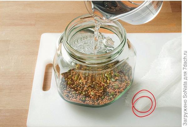 Семена: 70 г смеси семян положите в широкую стеклянную банку и залейте холодной водой.