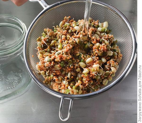 Готовые к употреблению семена откиньте на сито и промойте еще раз холодной водой.