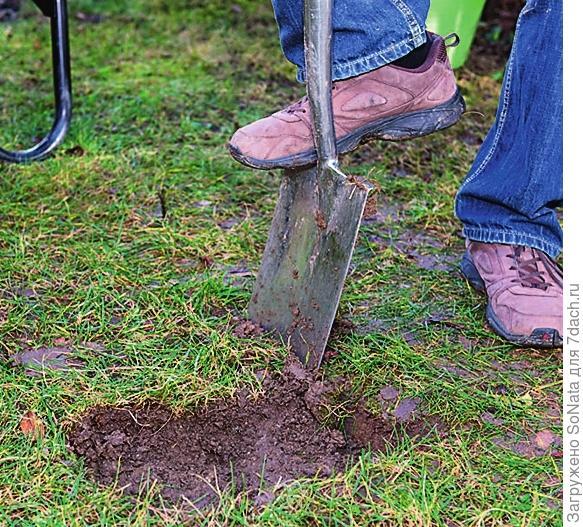 На тех местах, где будет пролегать ваша дорожка, снимите дерн и часть земли - глубина ямок должна быть на несколько сантиметров больше, чем толщина плит.