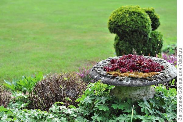 Молодила не просто красивые растения, они отличаются весьма неординарным характером, поскольку открывают простор для создания неожиданных композиций.