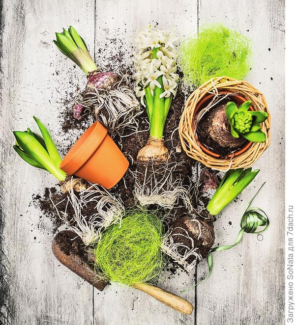 Домиками для луковичных способны стать самые разнообразные емкости: от горшков до миниатюрных корзинок.