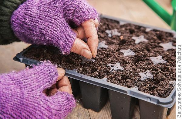 Семена лука-порея высевайте негусто -  по 1-2 семени в каждую ячейку