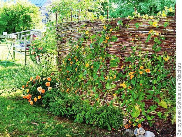 Изгородь, сплетенная из ивовых прутьев или лещины, придает саду шарм естественности.