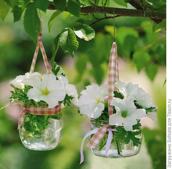 Очень нежная композиция получается из цветков петунии и листьев пеларгонии с белой каемкой по краям. Все элементы поместили в стеклянные баночки и подвесили в саду.