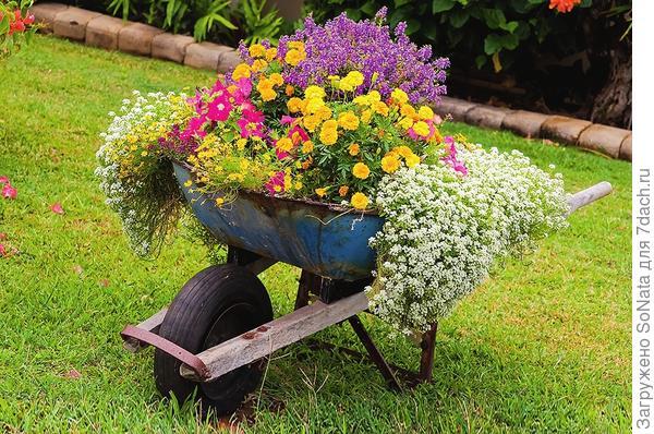 ПИли садовую тачку