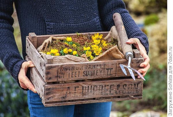 Идеальное время для посадки весенника - осень. Это можно сделать и весной, но тогда корневища нужно выкапывать вместе с земляным комом.