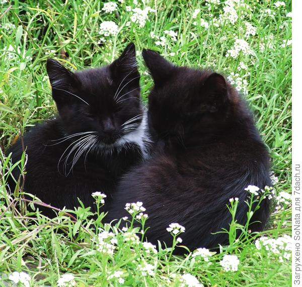 Симпатичные котейки любят сад не меньше его заботливой хозяйки.