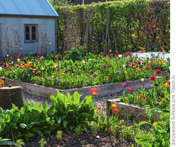 Высокие грядки, до того как их заполнят овощные растения и пряные травы, можно занять тюльпанами с цветками разной окраски