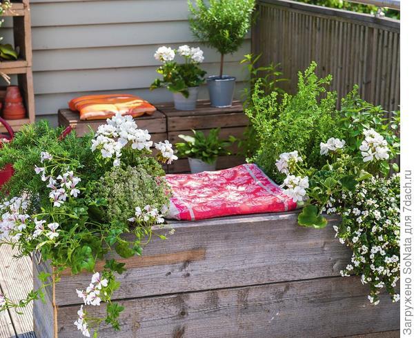 Бесподобно выглядят композиции из пряморастущих и ампельных растений: белой пеларгонии, бакопы (Bacopa), тимьяна и розмарина