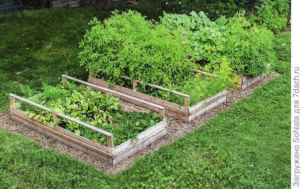 Уменьшить количество сорняков помогут смешанные посадки (совместное выращивание на одной грядке овощей, ягод и трав), где растения-уплотнители (или соседи, как их еще называют) выполняют роль живой мульчи.