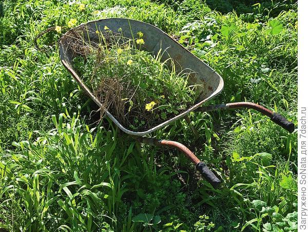 В компост не должны попадать цветки сорняков: многие из них могут дозревать и в срезанном виде.