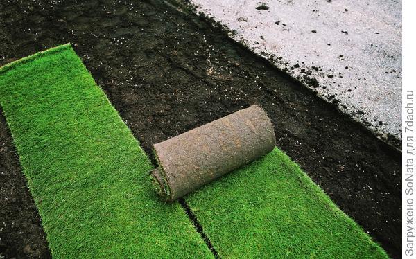Рулонный газон хорош тем, что его можно укладывать в течение всего сезона - с мая до сентября