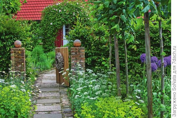 У калитки гостей встречают цветущие декоративный лук Globemaster, пупавка красильная (Anthemis tinctoria) Sauce Hollandaise, орлайя (Orlaya) и манжетка. С арки у входной двери живописно свисает плетистая роза