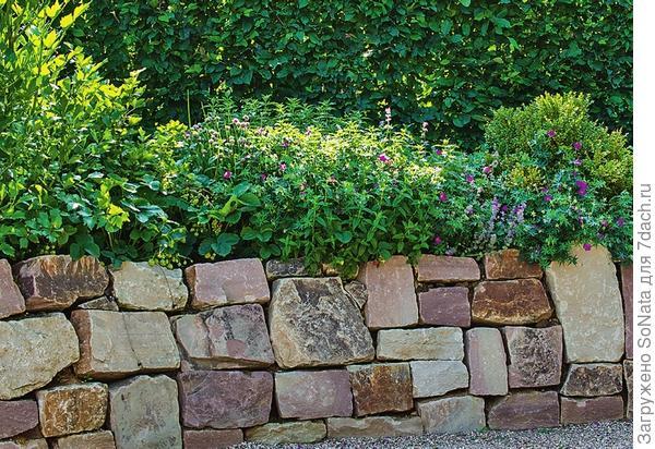 Стенка сухой кладки из граувакка выглядит очень гармонично. Не в последнюю очередь на это влияет форма камней - многие из них почти квадратные.