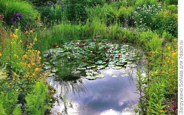После того как на различных уровнях пруда и на берегу будут высажены растения, он приобретет живой облик