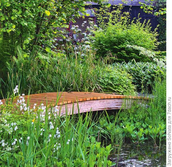 Слегка изогнутый деревянный мостик ведет через заболоченную часть пруда и мелководье мимо пушицы, частухи и осоки