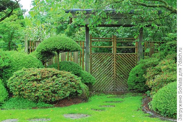 Обыкновенный газон приятно разнообразит интерьер любого участка