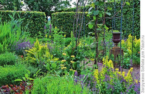 Впечатляюще выглядит комбинация котовника со светло-фиолетовыми соцветиями и барбариса с желто-зелеными листьями. На заднем плане цветет термопсис мохнатый.