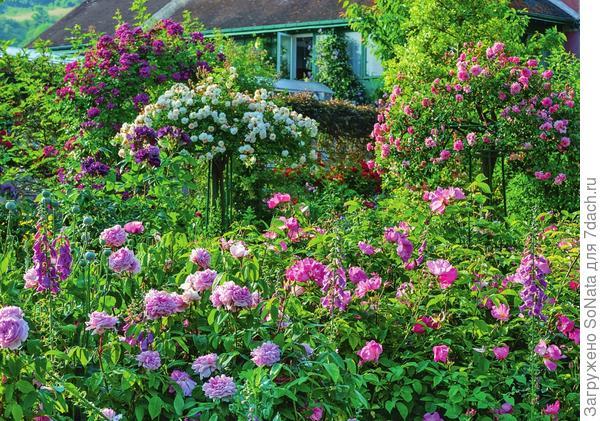 Владелец этого сада - большой почитатель роз, ведь участок всецело отдан в распоряжение королеве цветов