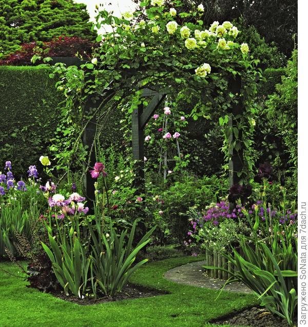 Плетистые розы подчеркивают изящество арки и позитивно влияют на ваше настроение.