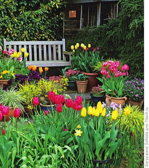 Посадка луковичных в вазоны поможет быстро сменить декорации после окончания их цветения.