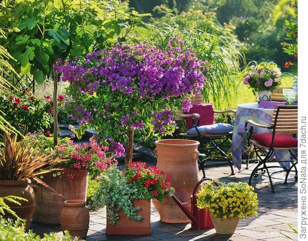 Словно на юге Италии чувствуешь себя на террасе среди сочных красок бугенвиллеи, инжира, апельсинового дерева.