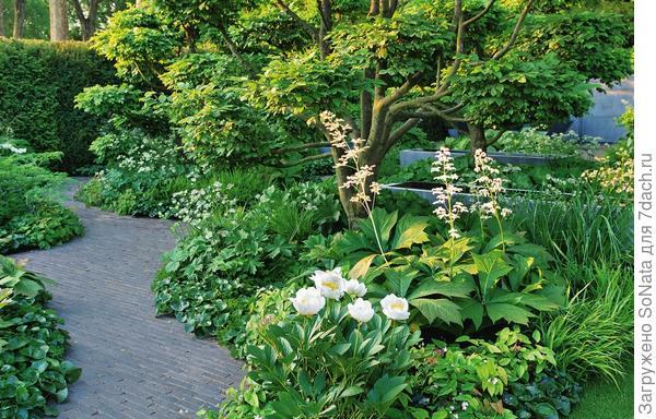 Вот как выглядит сад, когда в нем обитает немало зеленолистных жильцов. Но и здесь на общем фоне эффектно выделяются огромные листья роджерсии и воздушные метелки ее соцветий.