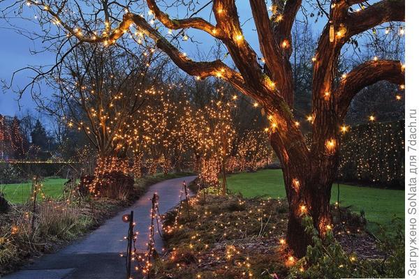 Огоньковое дерево превратит обычный сад в сказочное царство.