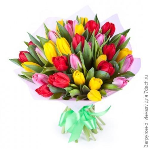 http://flowersmania.ru/image/cache/data/images/glavv_496-500x500.jpg